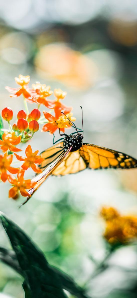 蝴蝶 昆虫 花朵 采蜜