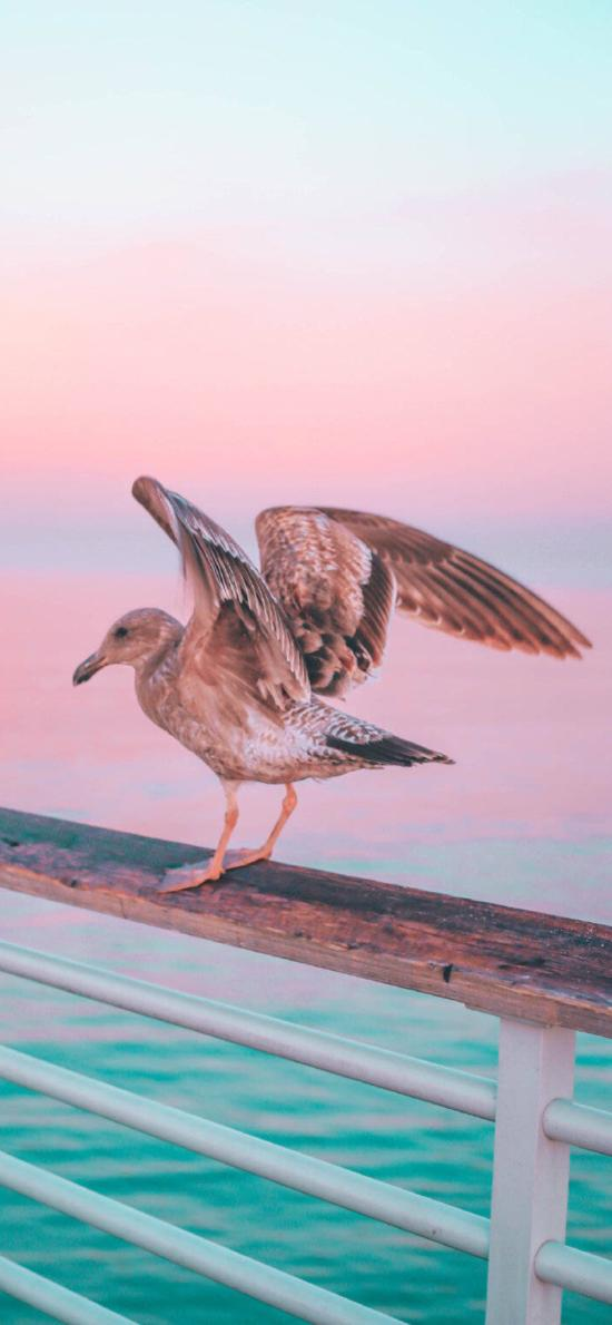 大海 栏杆 飞鸟 海鸟 展翅