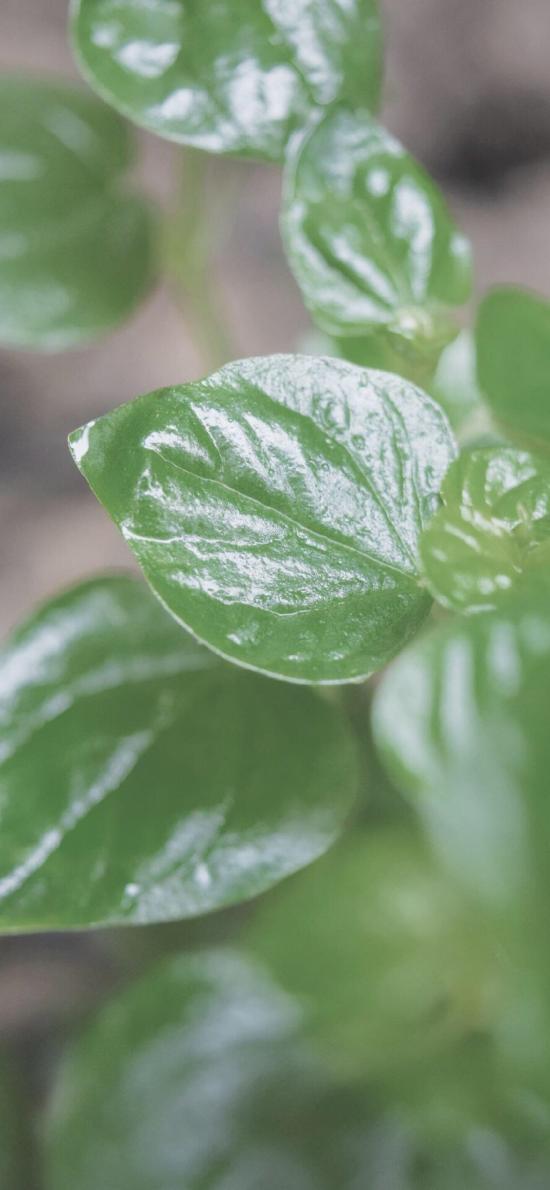 绿植 植株 树叶 绿油油