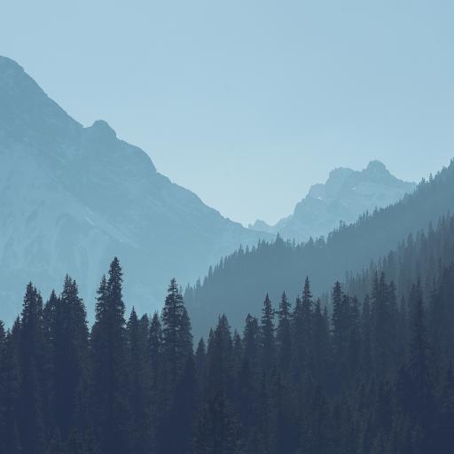 森林 树林 大山 大自然