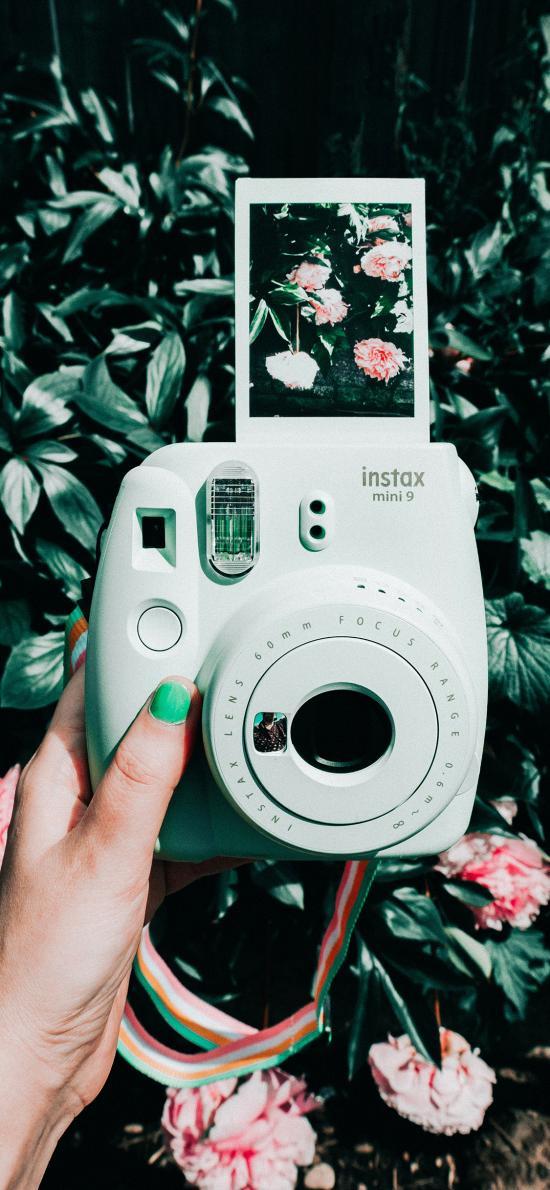拍立得 马卡龙绿 相机 摄影 照片 鲜花