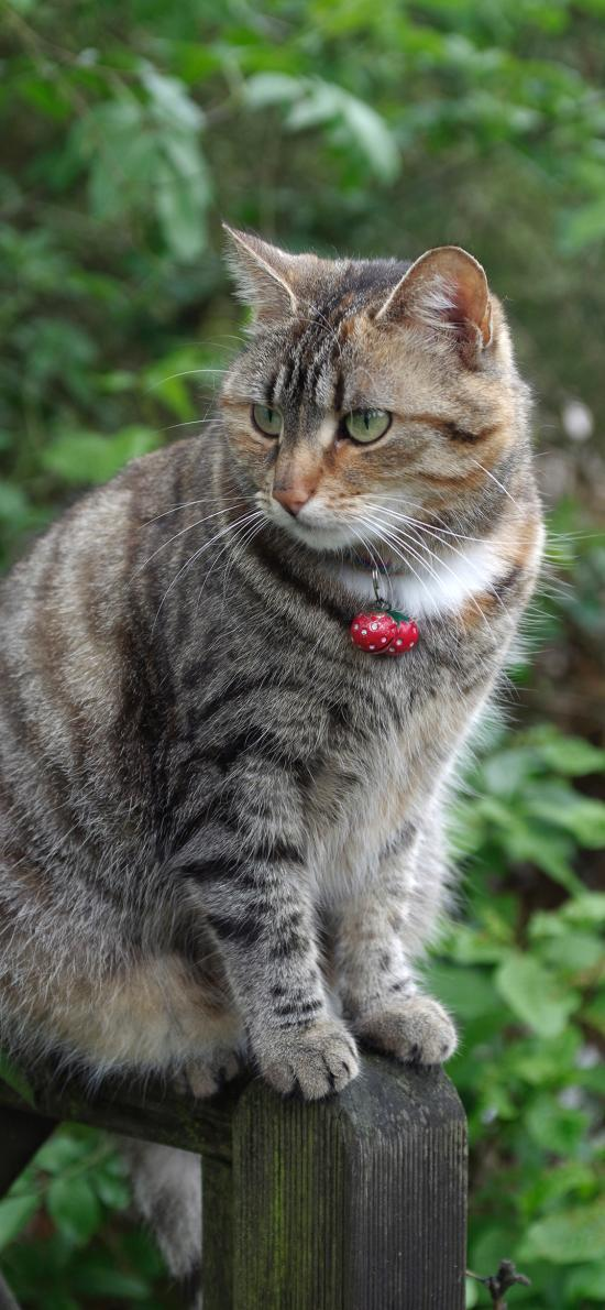 猫咪 宠物 花猫 皮毛 项圈 铃铛