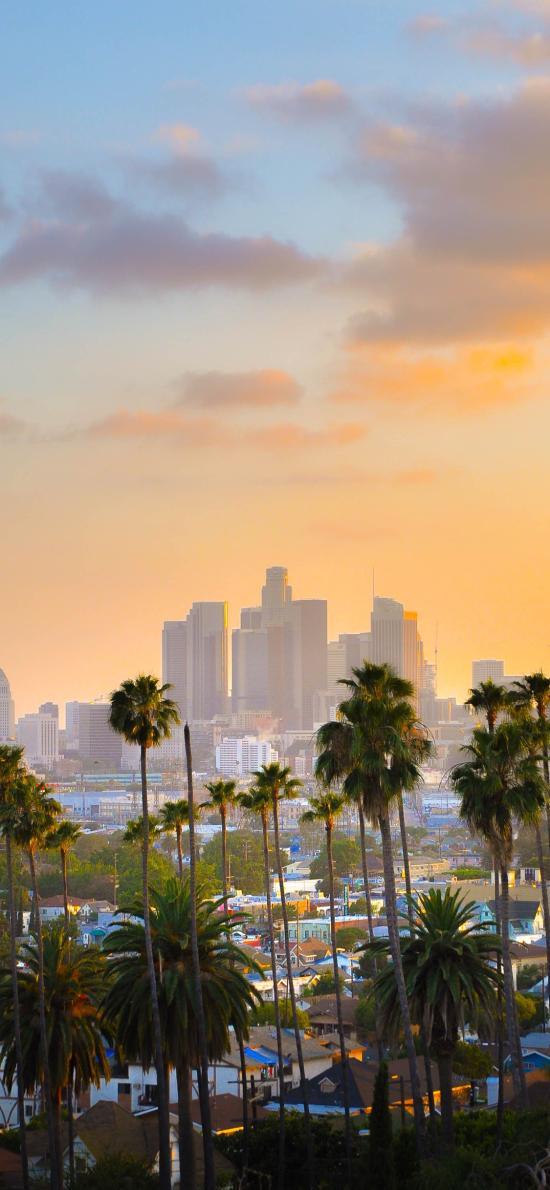 城市 太阳 景色 椰树 黄昏