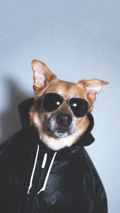 狗 犬 汪星人 宠物 墨镜 可爱
