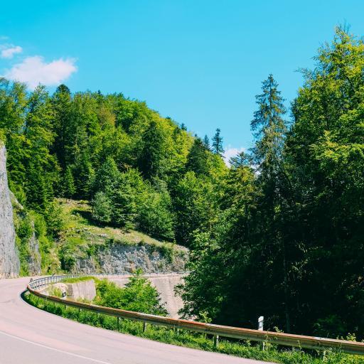 道路 转弯 蓝天 树林