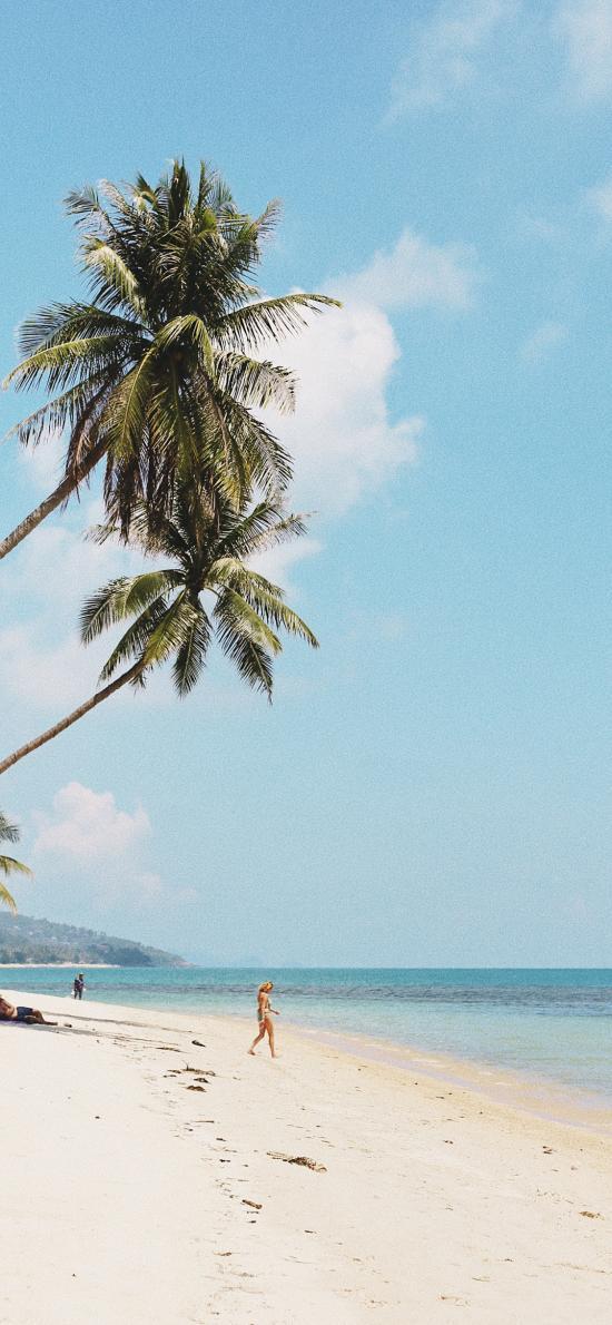 沙滩  海岸 椰树 大海