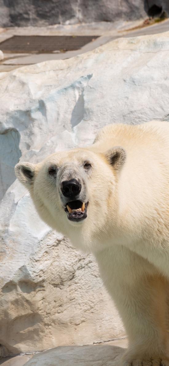 北极熊 皮毛 极地 饲养