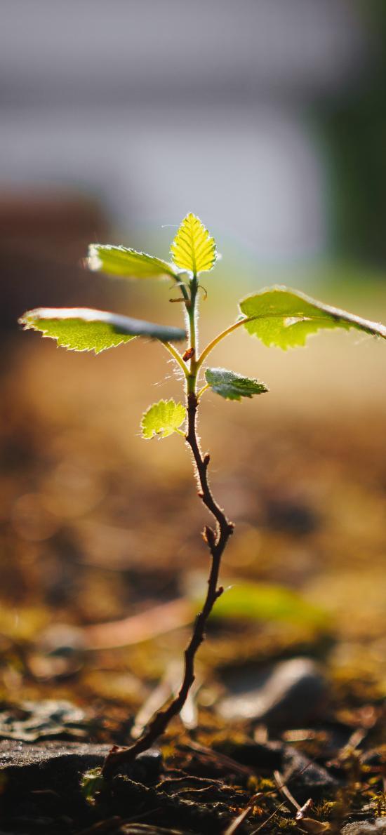 绿植 发芽 破土 嫩叶