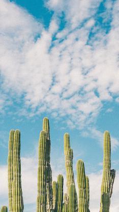 仙人掌 天空 蔚蓝 白云 绿植