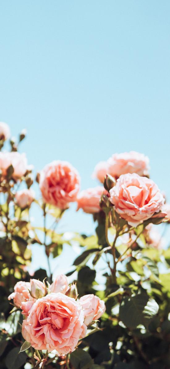 鲜花 盛开 枝叶 春天