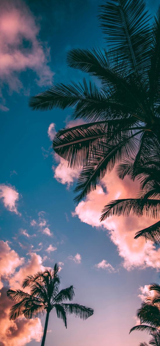 天空 云朵 树木 仰望