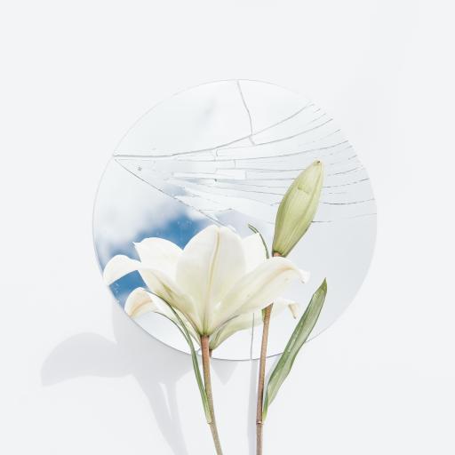百合 鲜花 盛开 枝叶 镜子 破裂