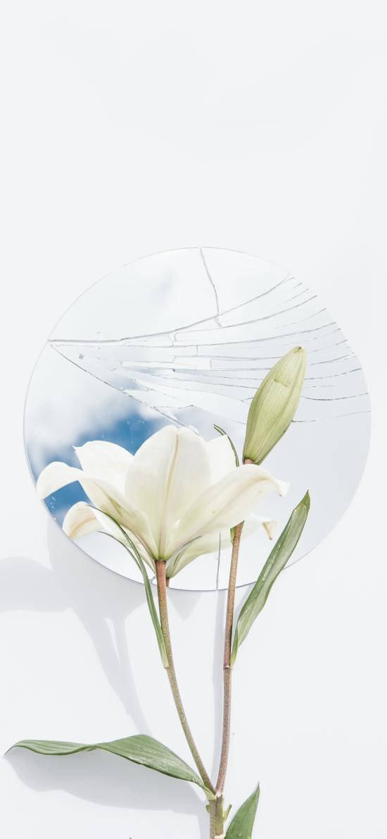 鲜花 百合花 白色 盛开 镜子