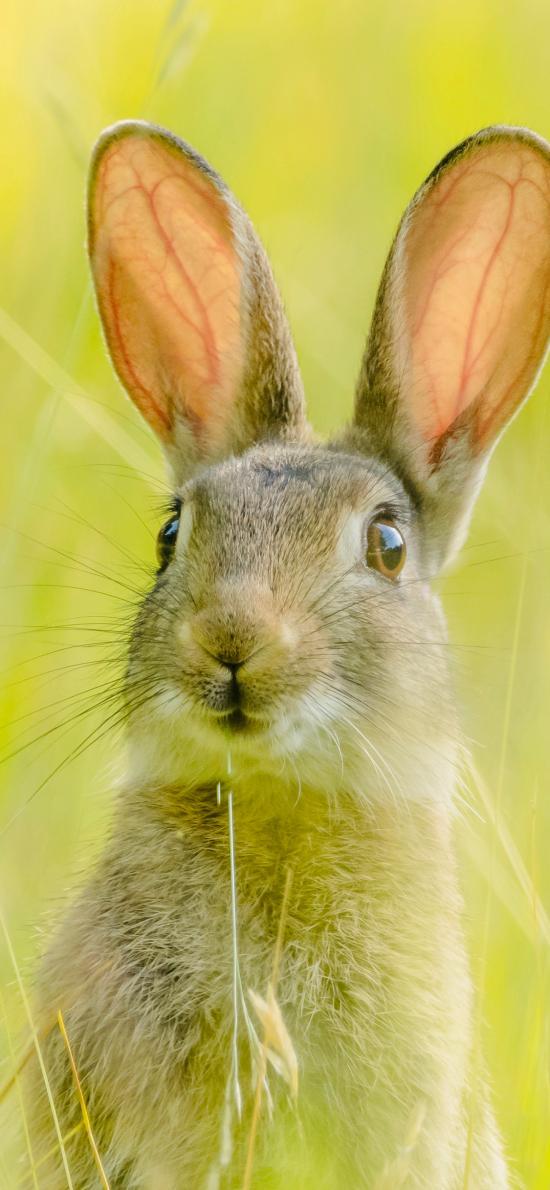 兔子 皮毛 可爱 草丛