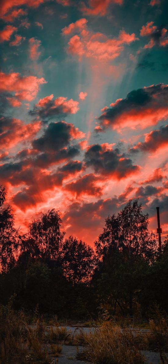 云彩 天空 树木 阳光 唯美