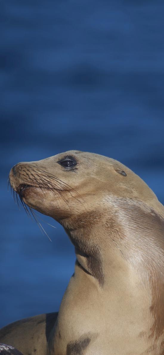 海洋 生物 海豹 皮肤