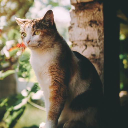 猫咪 墙角 宠物 橘猫