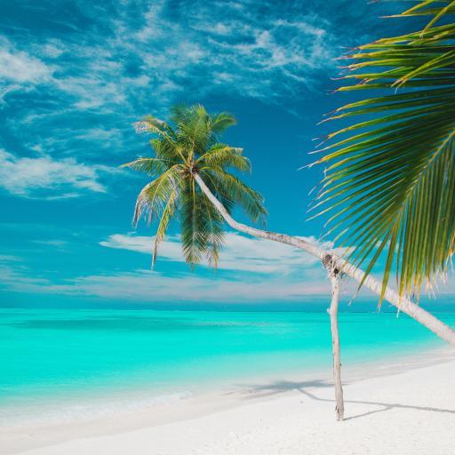 景色 度假 沙滩 碧海蓝天 椰树