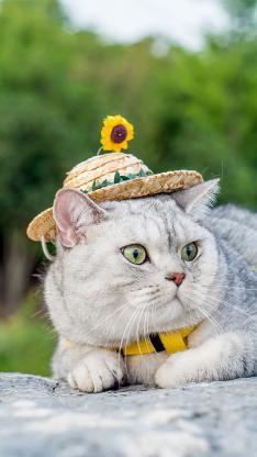 猫咪 草帽 石块 宠物