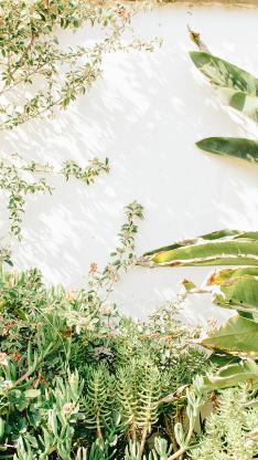 庭院 绿植 绿化 芭蕉叶 树木