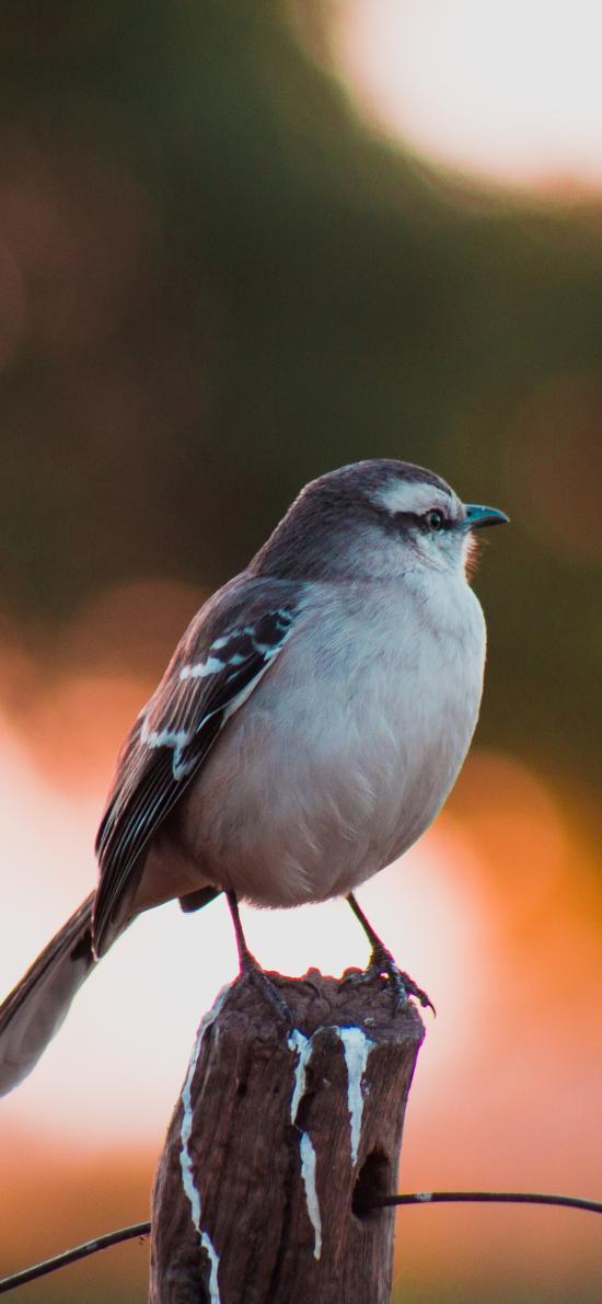 树桩 飞鸟 栖息 山雀