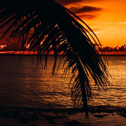 大海 夕阳 树叶 唯美