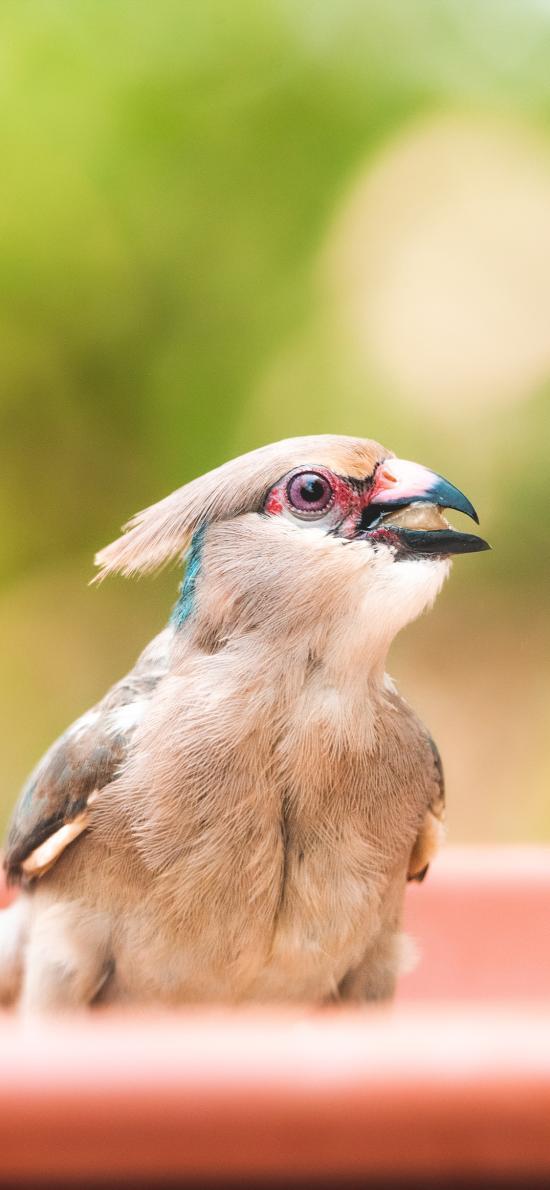 小鸟 鸟类 羽毛 飞鸟