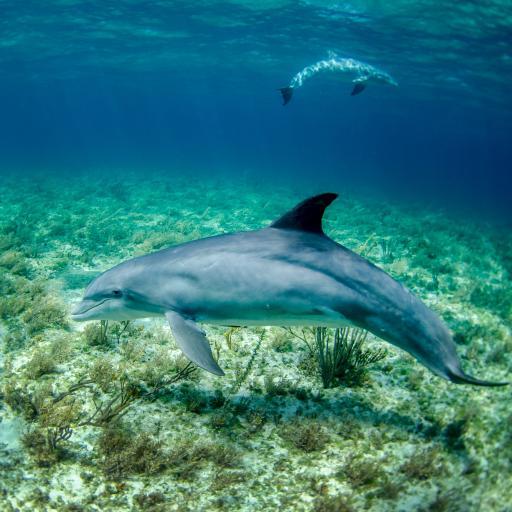 海洋 海豚 浅海 海草