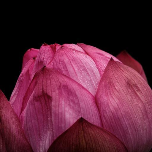 花苞 花朵 花瓣 层叠