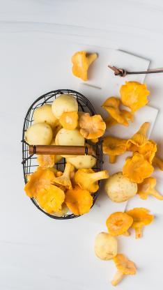菌菇 菌类 黄平菇 小土豆