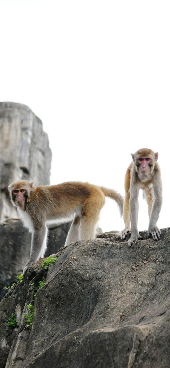 猴子 影视 灵长类 爬行