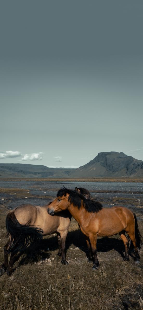 郊外 山峰 马匹 棕马 毛发
