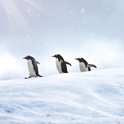 企鹅 极地 冰川 游禽