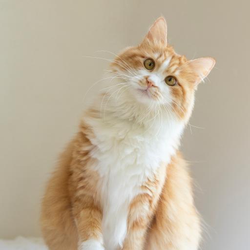 猫咪 宠物 橘猫 肥猫
