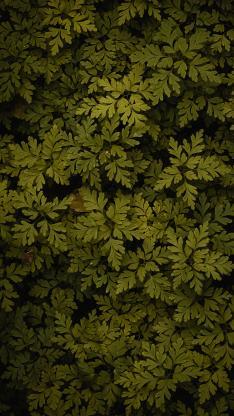 植物 草本 绿叶 绿化