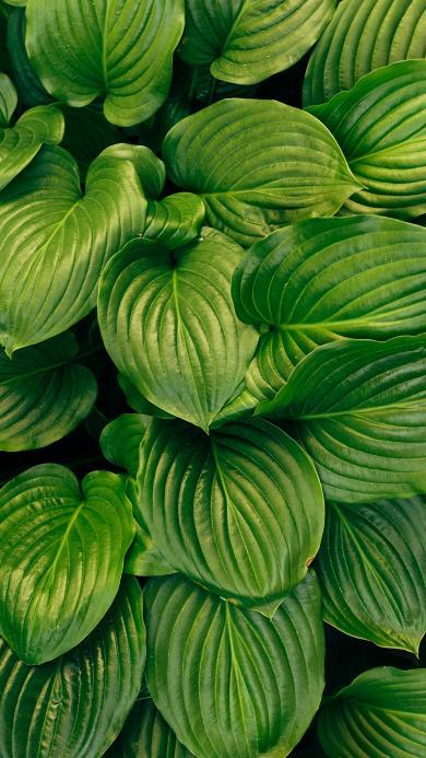 绿植 绿叶 观赏性