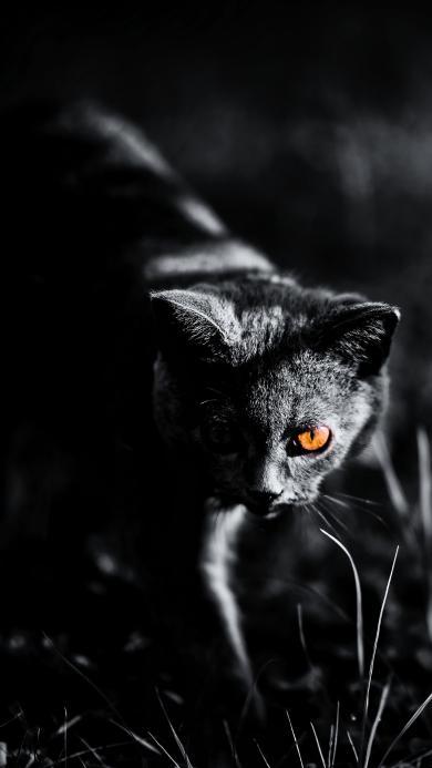 猫咪 黑白 光线 夜晚