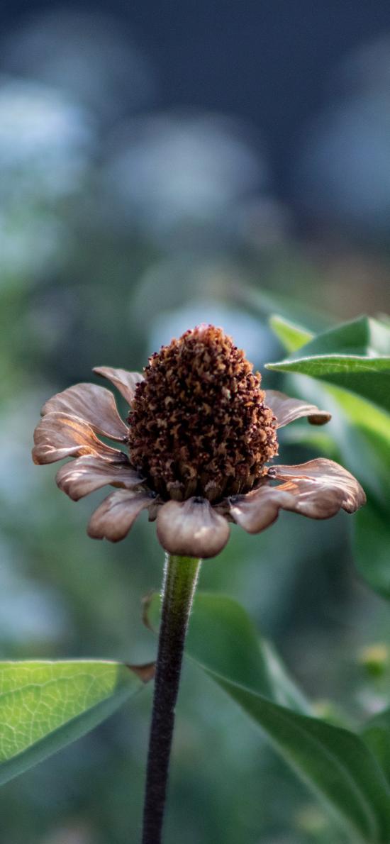 花朵 花蕊 枝叶