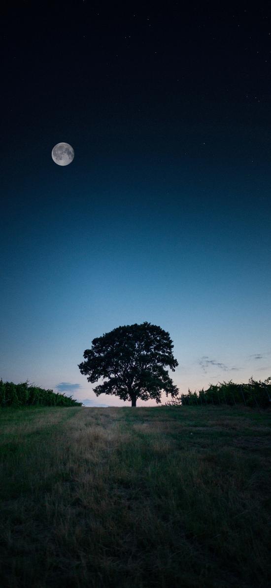 郊外 夜景 树木 月亮