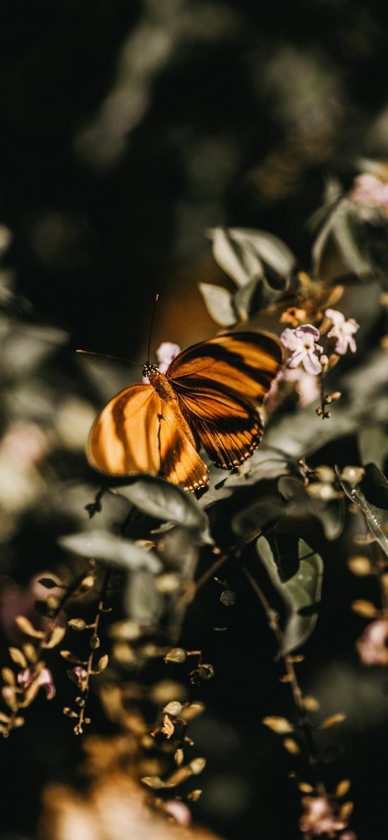 蝴蝶 昆虫 枝叶 采蜜