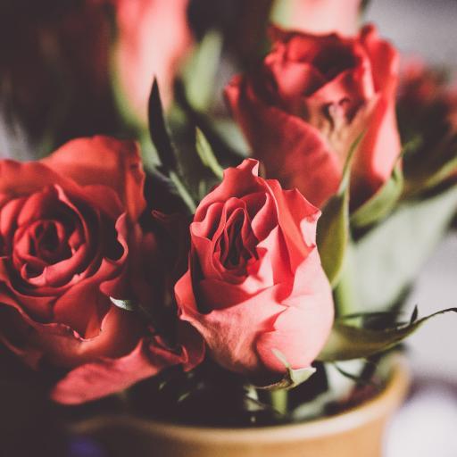 玫瑰 鲜花 花束 鲜花