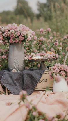 红车轴草 花田 花球 鲜花