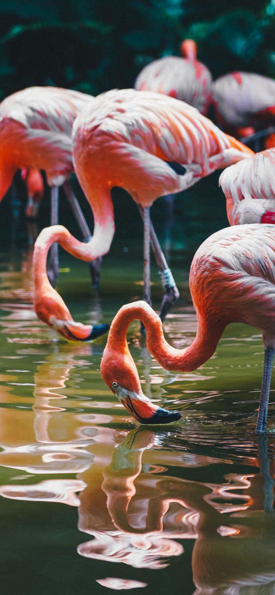 火烈鸟 鸟类 湖面 群居