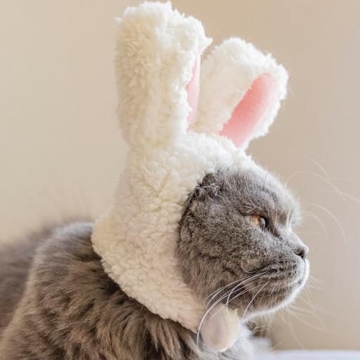 猫咪 兔耳朵 宠物 可爱
