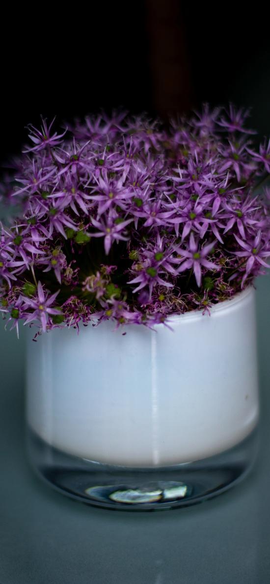 大花葱 绿植 盆栽 鲜花 盛开 紫