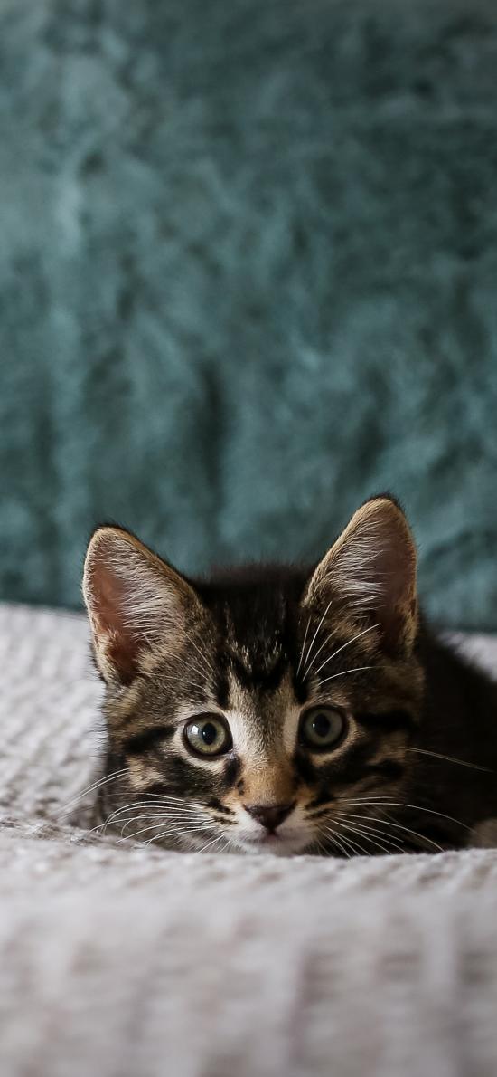 宠物 猫咪 喵星人 可爱