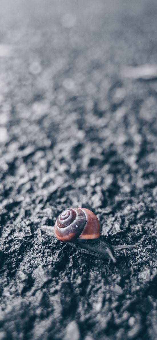 蜗牛 爬行 路面 软体