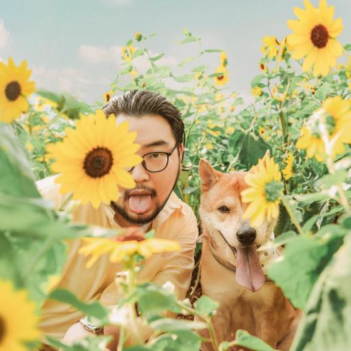 向日葵 葵花 狗 宠物