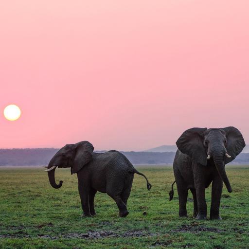 大象 草原 夕阳 太阳