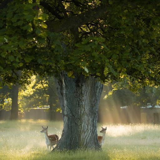 郊外 树木 草地 小鹿 梅花鹿